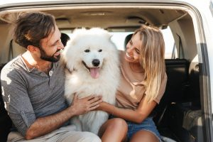 Pet socialization offers a lot of benefits for you and your dog alike