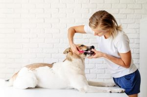 February is National Pet Dental Health Month, and we've got tips for keeping your pet's teeth healthy.