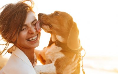 Enjoy a Safe Summer With Your Pet