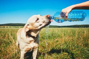 7 Hot Tips for Summer Pet Safety