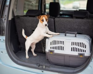 Traveling with Pets– Tips From Your Kennett Square Veterinarian