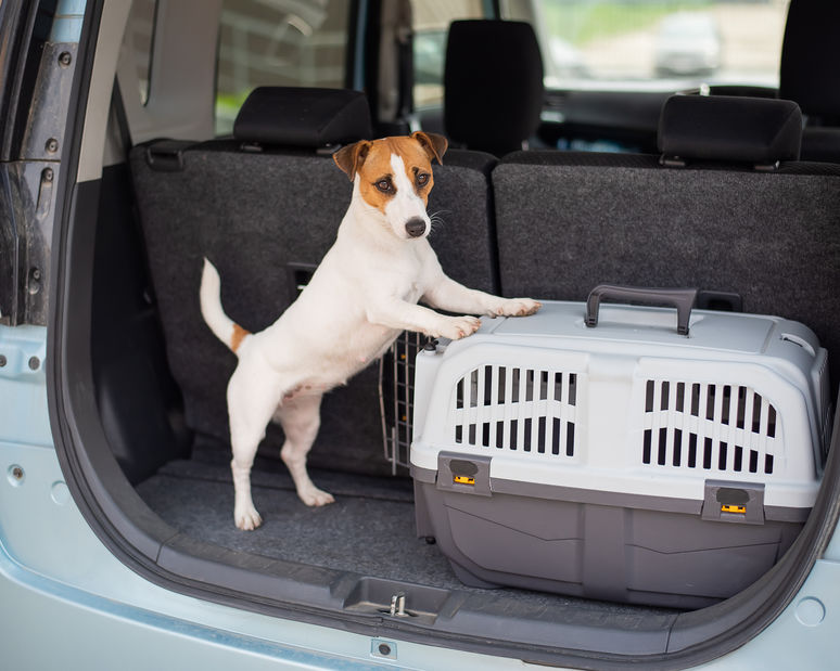 Trips Are Better With Your Dog