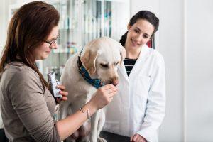 Understanding Veterinary Diagnostics