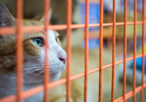 9 Ways to Assist Homeless Dogs and Cats