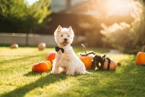 Halloween Safety Tips for your Pets
